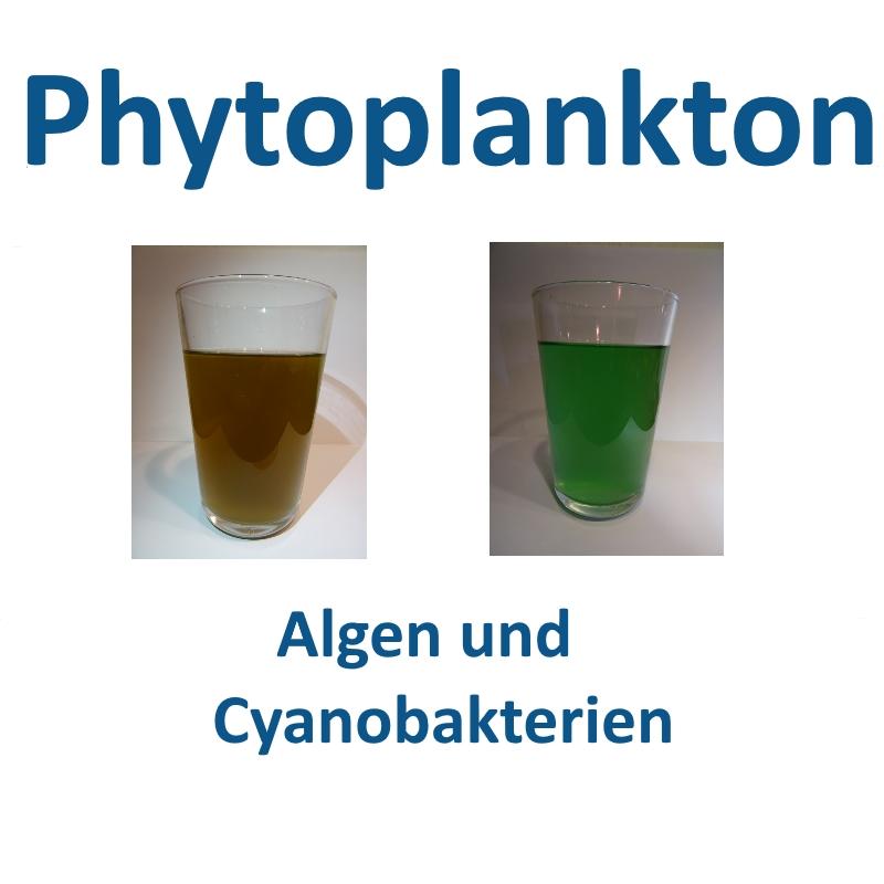 Phytoplankton