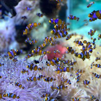 Plankton für Züchter, Forschung und Labore